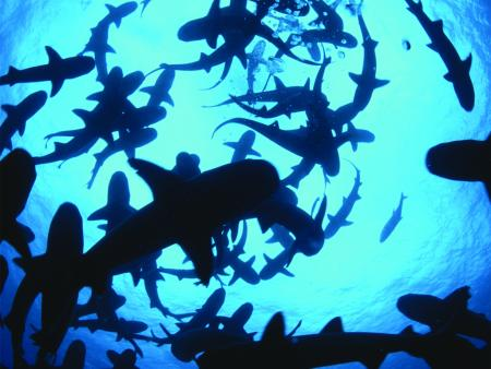 Shark Week at the Office: Survival Guide